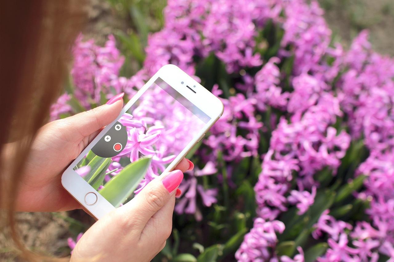 mobilfoto av blomster