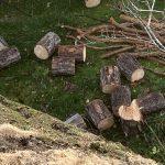 Unngå feilskjær om trær